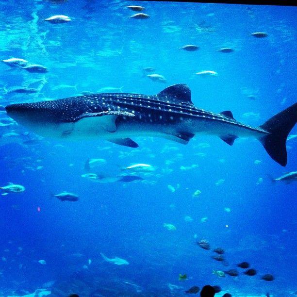 123 Best Images About Georgia Aquarium