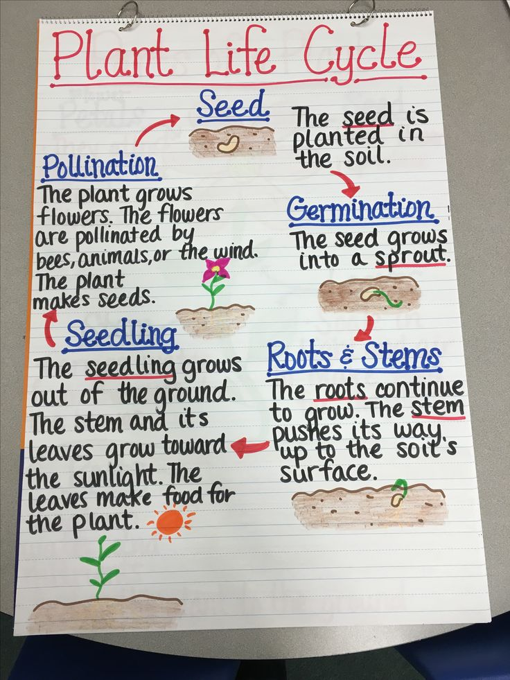 Plant Life Cycle Anchor Chart                                                                                                                                                                                 More