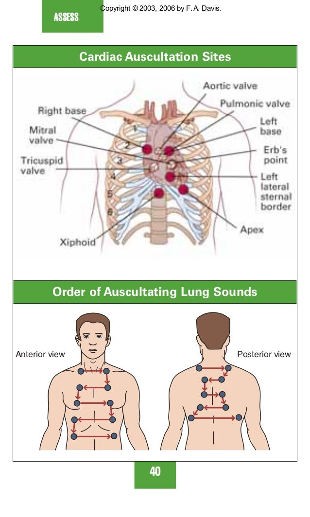 auscultation of lungs sounds - Google Search