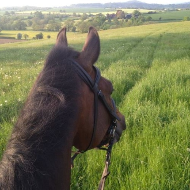Best View In The World Horses Bay Horse Horse Ears