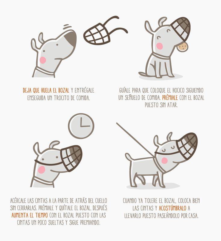 ¿Qué puedo hacer para que se habitúe mi perro al bozal? | Fundación Affinity