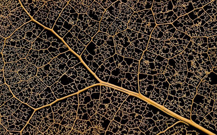 Художница природа, David Fransolet. Ловите мгновения на Яндекс.Картинках.