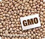 Top 10 genetically modified foods to avoid eating.
