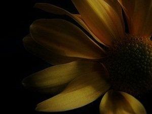 Never give an experimental artist flowers.