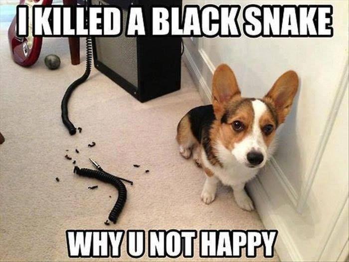 Dog Memes Of The Day 32 Pics Ep28 Dogs Dogmemes Memes Lovelyanimalsworld Lovely Animals World Funny Animals Cute Funny Animals Funny Animal Memes