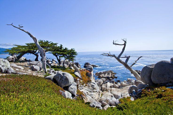 монтерей калифорния - Поиск в Google