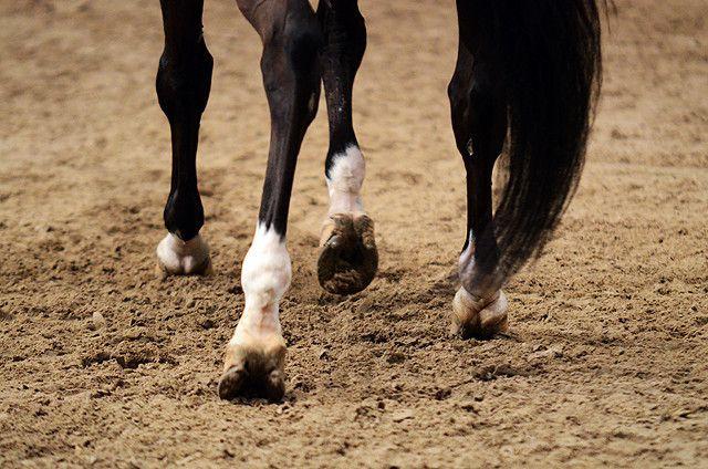 Det er gjerne ikke så vanskelig å se at en hest er halt, men selv veterinærer kan ha problemer med å avgjøre hvilket bein som er problemet. Her får du flere gode råd.