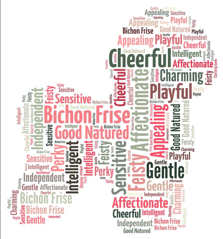Bichon Frise - Personalised dog word art. by YourOwnWords on Etsy https://www.etsy.com/listing/263737895/bichon-frise-personalised-dog-word-art