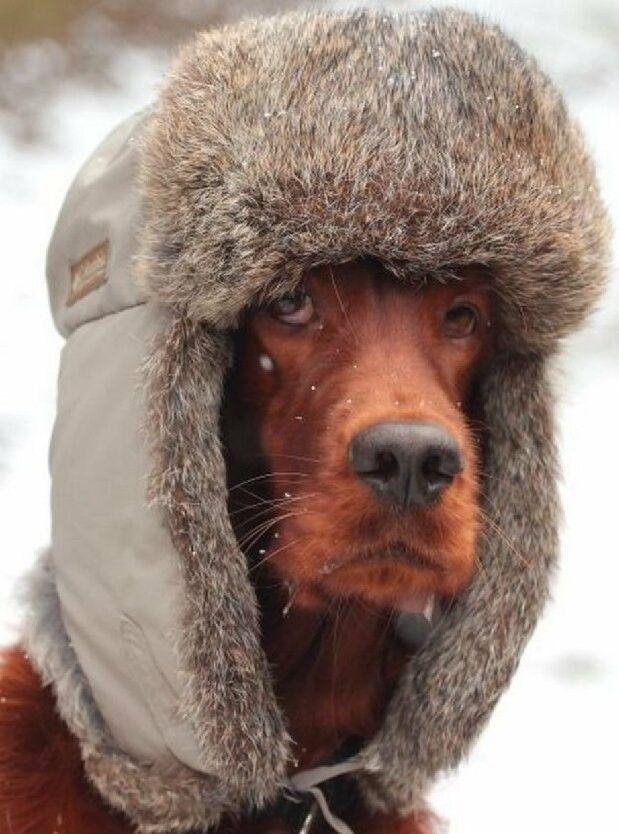 Коротко о погоде картинки приколы мороз, картинками средневековья