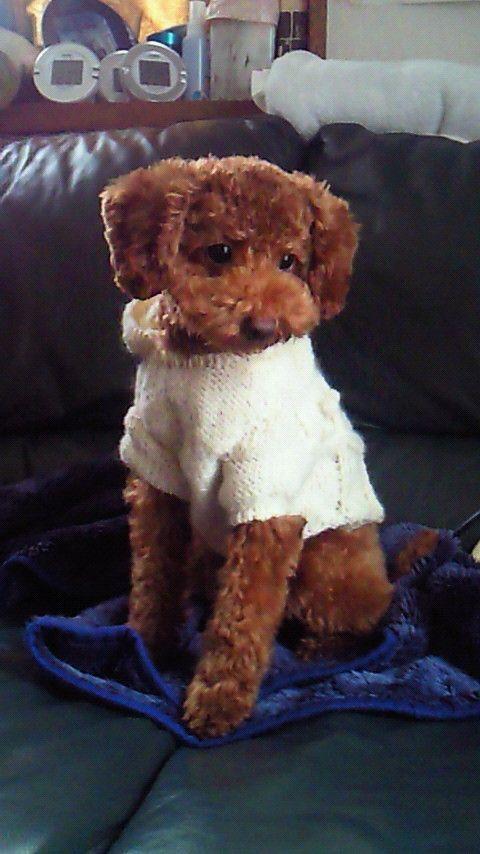 アラン模様のセーターです。首に結んだフサが揺れて可愛いです。(^0^)サイズをお教えいただきましたら合わせてお作り致します。首回り着丈(首下背中側と首下おなか...|ハンドメイド、手作り、手仕事品の通販・販売・購入ならCreema。
