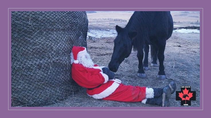 SANTA'S TIRED! Help him out this Christmas by giving that horse-crazy friend a gift certificate from Equi-Health Canada. Available in any denomination - valid towards any product or service we offer across Canada - and hey! (hay?) you come out Santa's hero!!! We customize each gift certificate for no extra charge AND we will add 20% in value to any purchases over $200! Visit the website www.equihealthcanada.com or call us at 888-938-6687.
