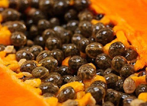 Papaya is een heerlijke vrucht die beroemd is om al zijn vele voordelen voor de gezondheid, dankzij het gehalte aan vezels, calcium, fosfor, ijzer, papaïne, thiamine, niacine, en vitaminen, die in ...