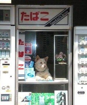 たばこ屋の主人。
