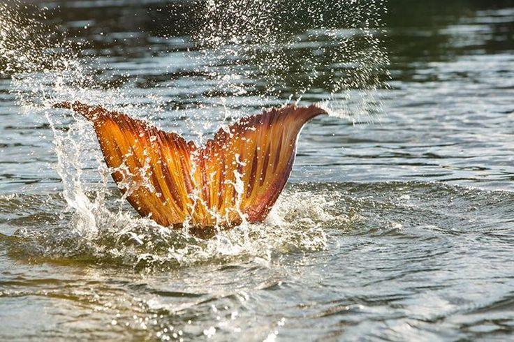 Mako mermaids, I want a tail like this.