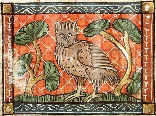 Medieval Bestiary : Owl Gallery