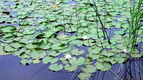Laghetto come costruire un laghetto in giardino for Costruire laghetto in giardino
