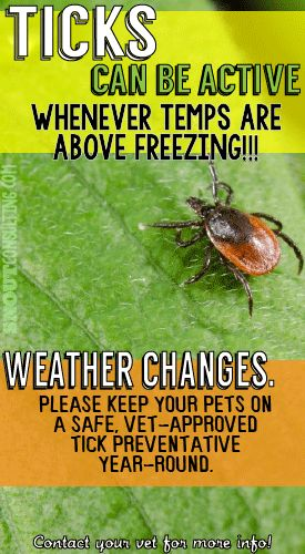 Remind pet parents! Ticks can be active whenever temps are about freezing! If you're a vet tech or veterinarian & would like a custom pin like this for your hospital, visit www.snoutconsulting.com #snoutsocial