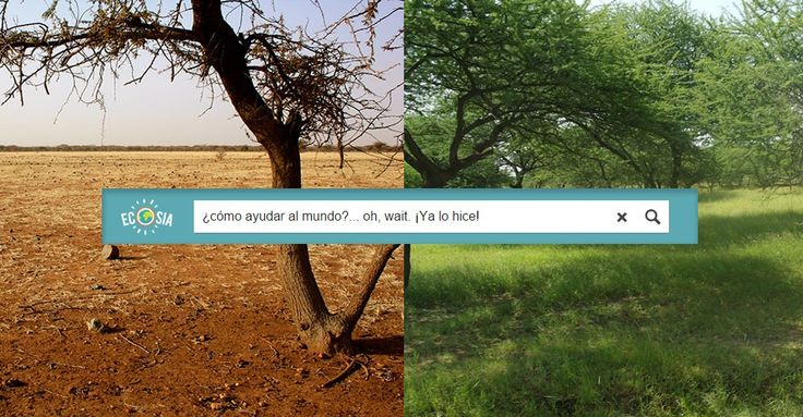 Esta empresa planta un árbol por cada búsqueda que hagas en internet