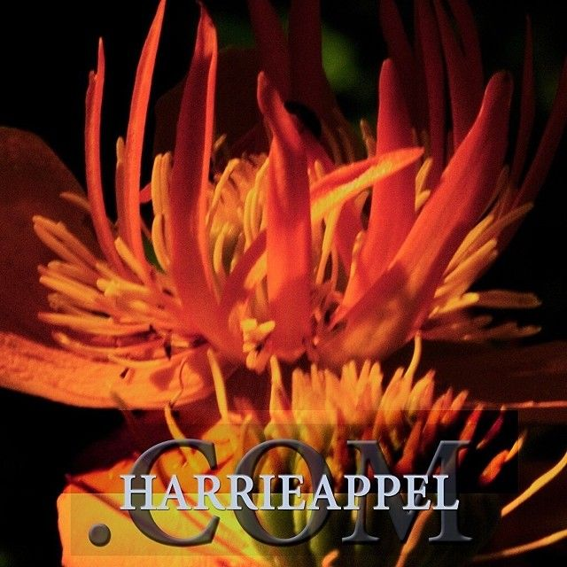 FanPagewww.facebook.com/harrie.appel BeautyBloghttp://harrieappel.com/ TravelBloghttp://carstensguesthouse.wordpress.com/ LinkedIndk.linkedin.com/pub/harrie-appel/27/bb6/2a4/ Twitterhttps://twitter.com/harrieappel Instagramhttp://instagram.com/harrieappel Webstorehttp://happelshop.com/ | www.harrieappel.com | #instappel#_4761