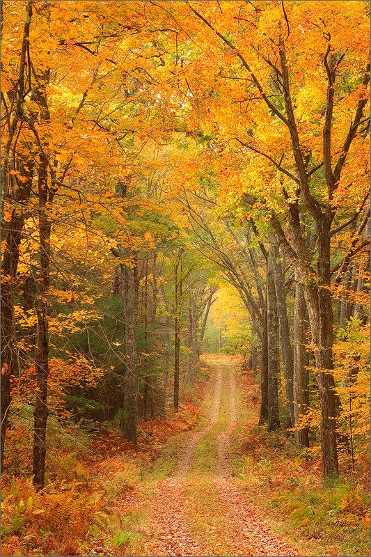 Quabbin reservoir, Massachusetts, gold, autumn, trail, forest, photo
