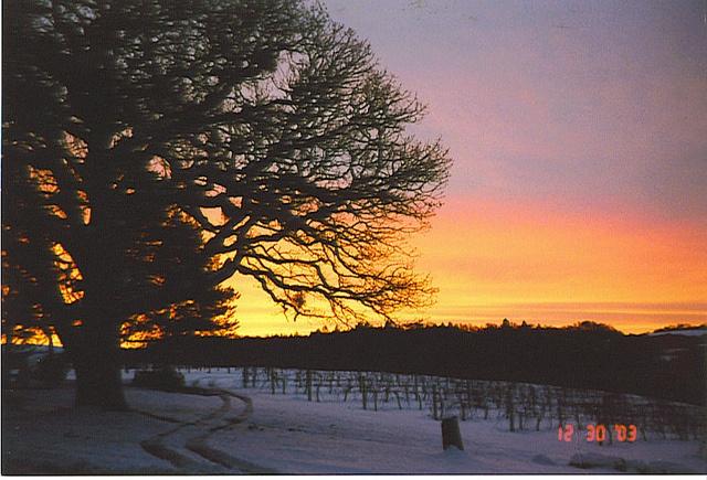 The vineyard...
