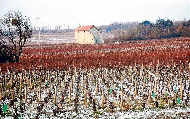 15 best autumn vineyards images on pinterest vineyard wine country and beautiful places - The splendid transformation of a vineyard in burgundy ...