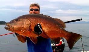 R sultat de recherche d 39 images pour gros poisson rouge de for Gros poisson rouge