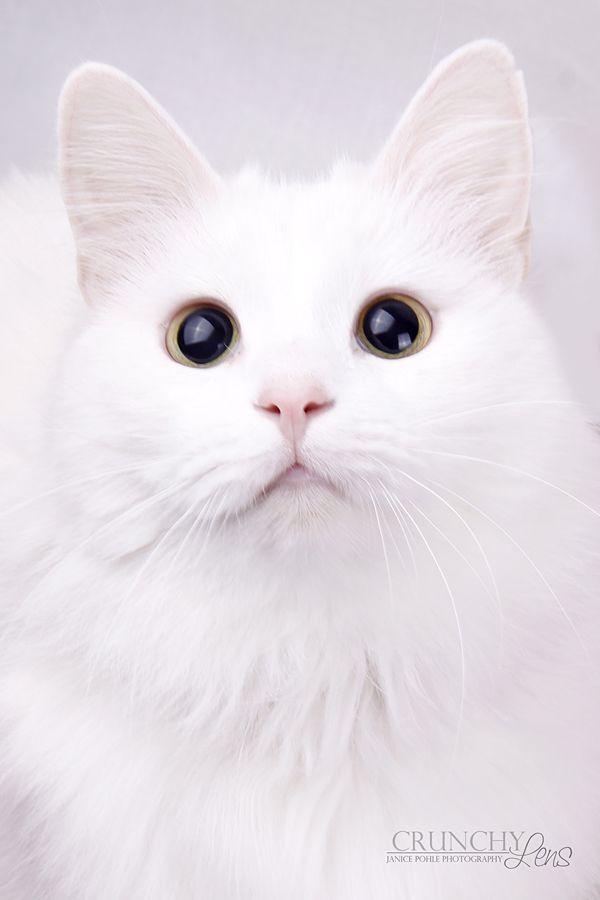 Those big eyes by dark-cayden.devia... on @DeviantArt