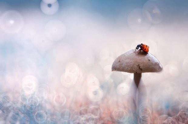 ladybug02