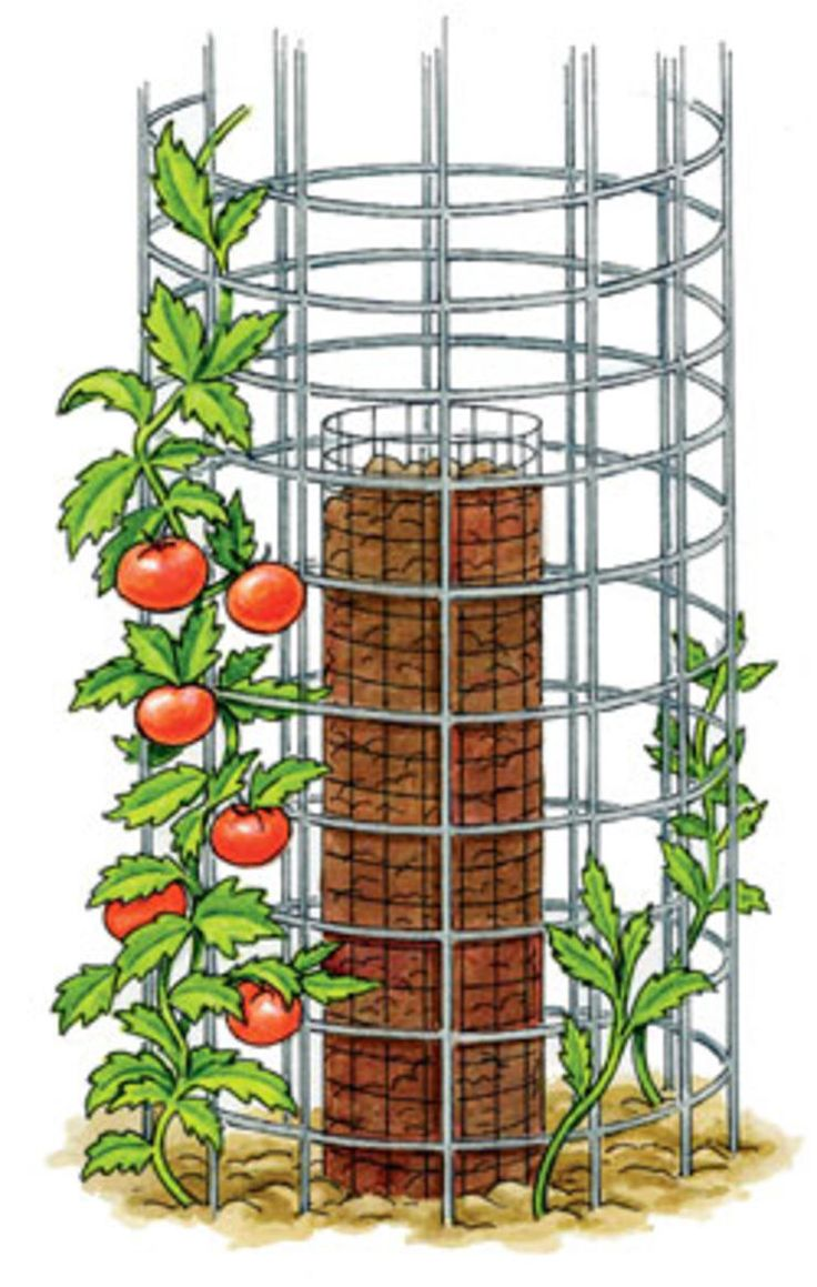 If space is limited, try growing your tomatoes in a double-ring cage. #Garden #garten #gardening