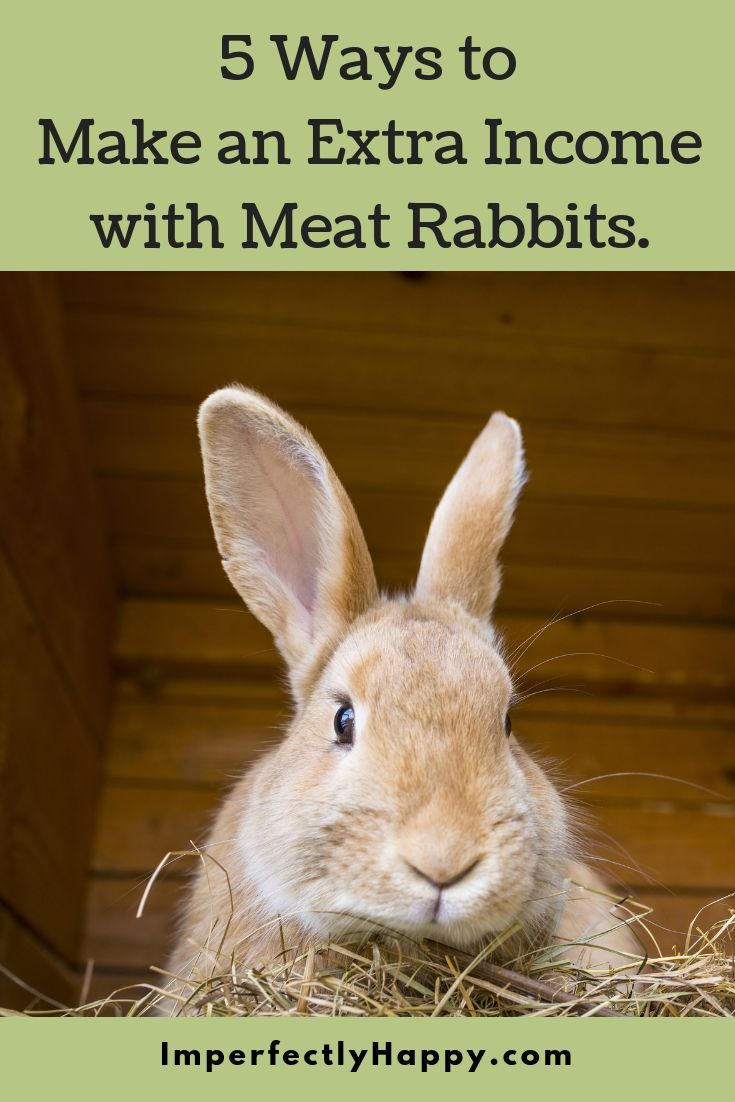 5 Ways to Make Money with Backyard Meat Rabbits | Meat ...