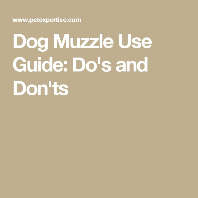 Dog Muzzle Use Guide: Do's and Don'ts