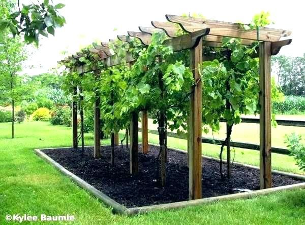 Building An Arbor Building A Grape Trellis Building A Small Grape Arbor It Guide With Regard Building An Arbor Backyard Vineyard Backyard Landscaping Backyard
