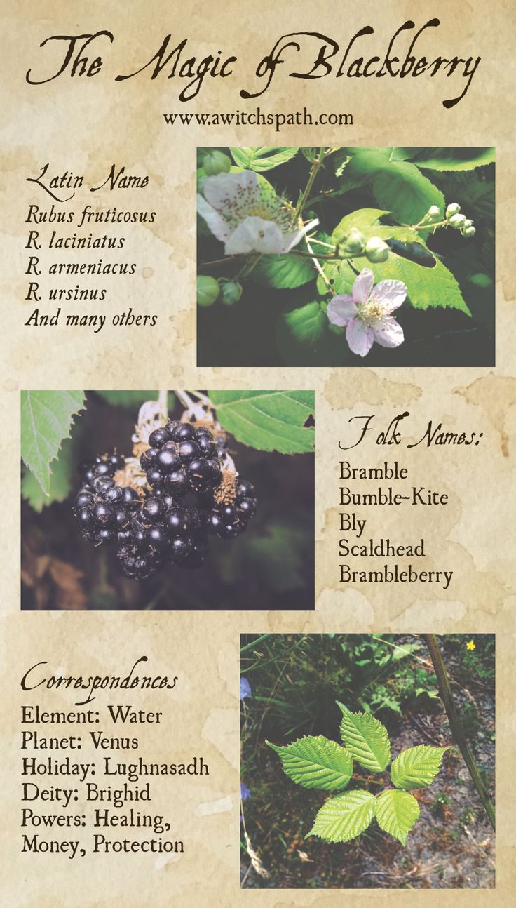 I'll be focusing on the magic of a different plant each moon cycle. This moon our plant is blackberry and I have a free infographic for you all.
