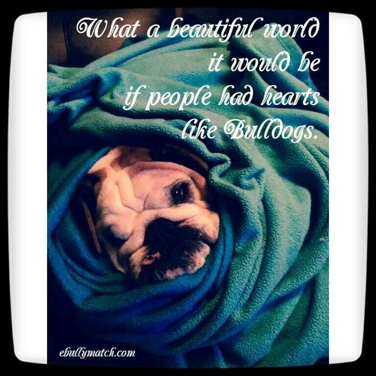 ❤ If we only had the wisdom of our fur babies ❤