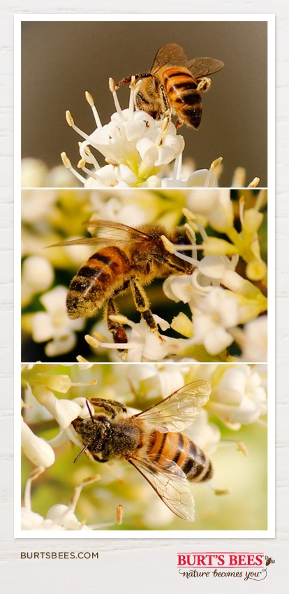 "These amazing little creatures really DO have knees – aren't they cute? ""The bee's knees"" means ""the highest quality"" because that's the area on their bodies where most of the golden nectar is concentrated. We adore everything about bees and honey: it's our raison d'être (reason for existing)!"