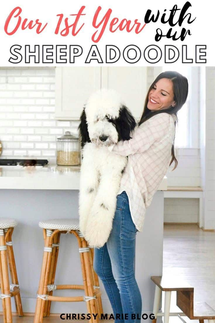 Our Giant Sheepadoodle The Good Bad The Smelly In 2020 Sheepadoodle Sheepadoodle Puppy Dog Daycare