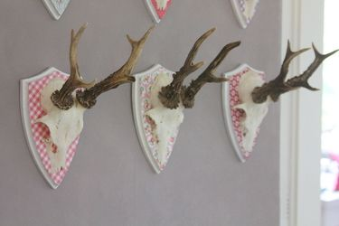 antler display idea
