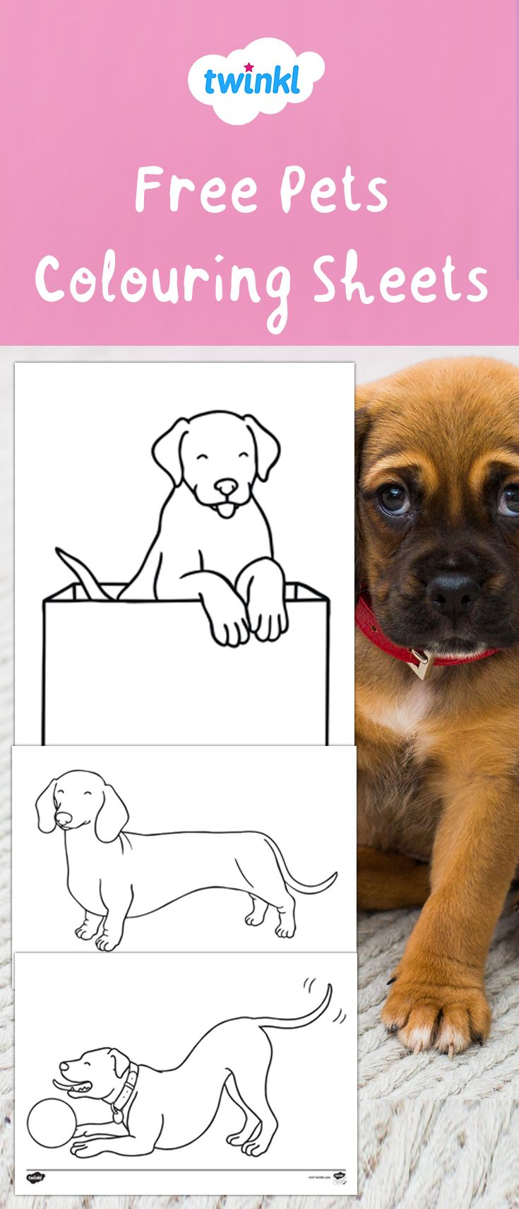 Perfect For National Pets Month Use These Free Pets Colouring Sheets For A Fun Fine Motor Skills Activity As Well As Making Cute Picture Motor Skills Activities Coloring Sheets Home