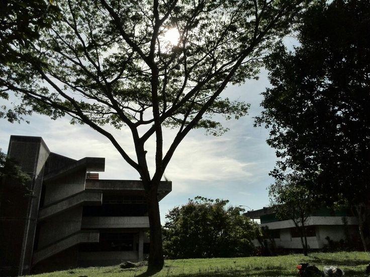 The sun through a tree