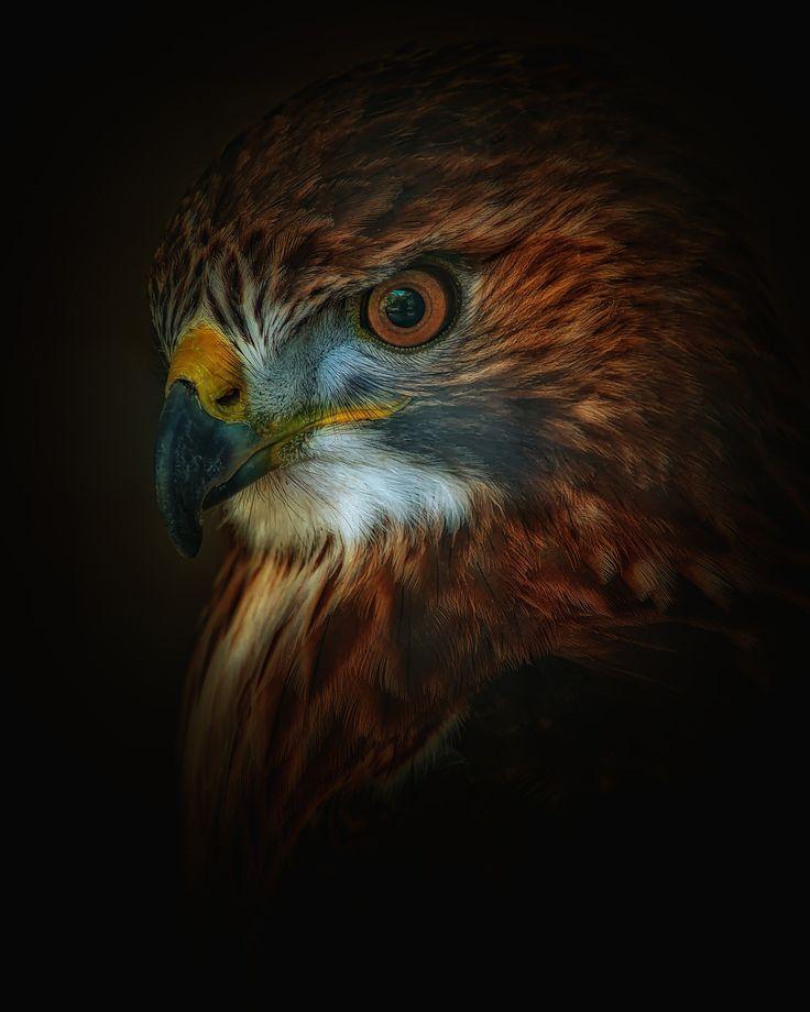 intense - avian beauty