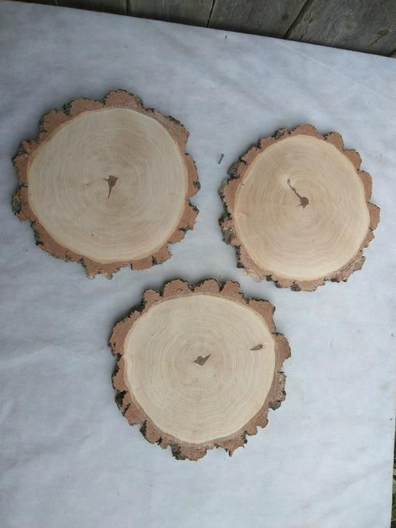 A Set Of 6 Birch Slices 11 Large Birch Wood Slices 11 Inch Wood Slices Wood Slices Rustic Wedding Decor Wood Slabs Plate Coasters Wood Slices Rustic Wedding Decor Candle Plate