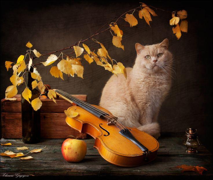 листьями, скрипкой,