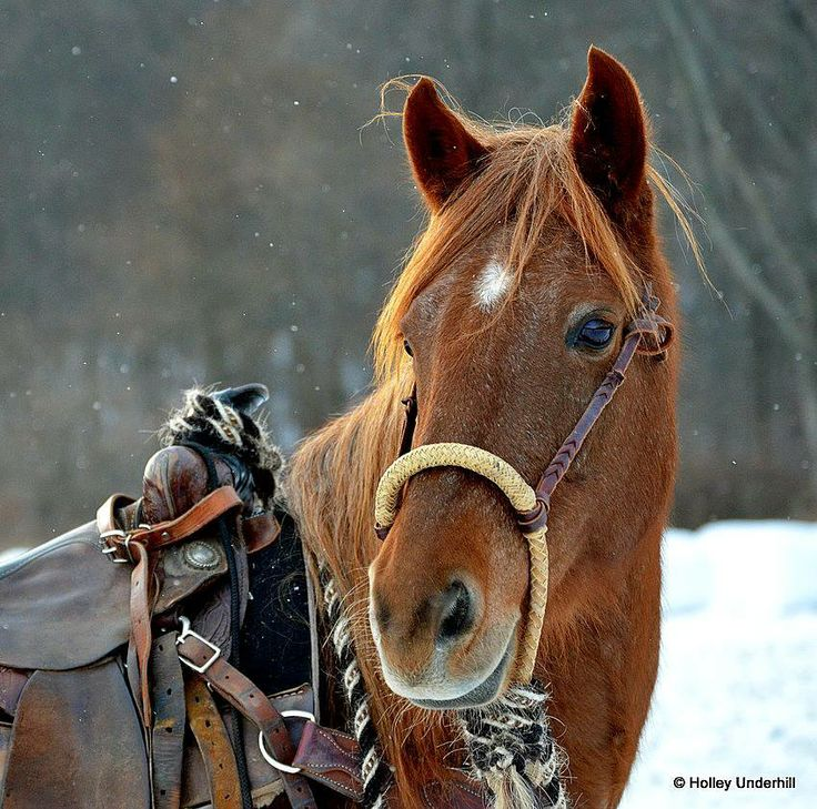 Amazing And Beautiful Horse Pictures At The Ranch