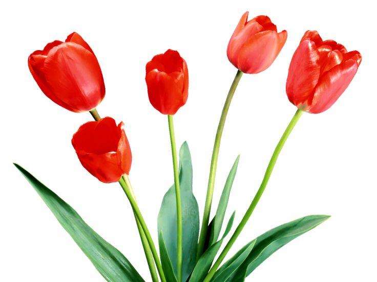 23 best clip art spring flowers images on pinterest spring rh pinterest com free clipart pictures of spring flowers clipart spring flowers border