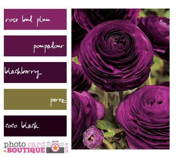 Plum Kitchen Paint: Pin By Stephanie Acker On For Your Palette Pleasure
