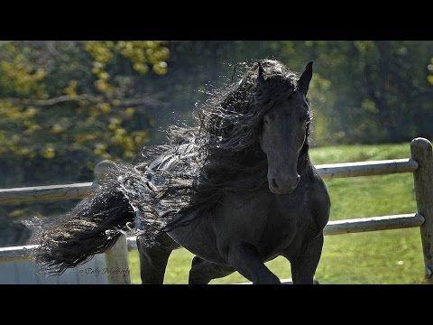 Los caballos mas finos del mundo pura sangre Los caballos mas finos del mundo pura sangre Los caballos mas finos del mundo pura sangre . Recopilacion