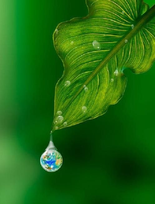 The world is in a single drop.    From consuelo cavalcanti