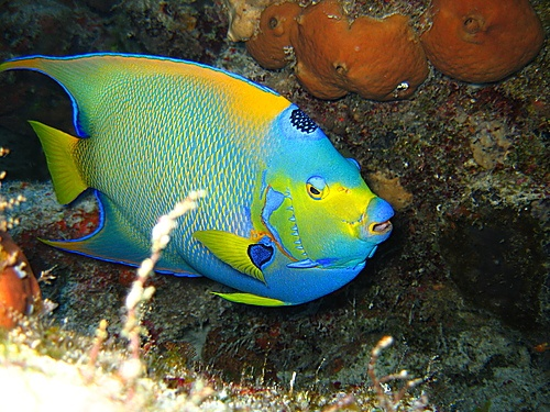 40 best colorful fish images on pinterest for Cool fishing wallpapers