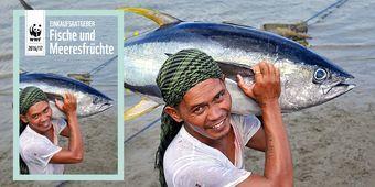 Neuer Einkaufsratgeber: Welcher Fisch darf auf den Tisch?